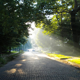 brick road by Fraya Replinger - City,  Street & Park  Neighborhoods ( illinois, brick road, trees, sunrise, urbana )