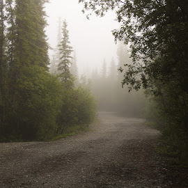 Into The Fog by Patricia Phillips - Landscapes Travel ( fog campgrounds alaska )