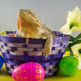 Easter Dragon by Lou Olarte - Public Holidays Easter ( easter, holidayjesus, easter eggs, bearded dragon, easter basket )