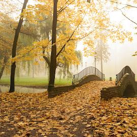Bridge in fog by Witold Steblik - City,  Street & Park  City Parks ( foggy, nature, autumn leaves, park, autumn, autumn colors, bridge, landscape )