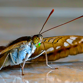 Lazy Insect by M Thantowi - Novices Only Macro