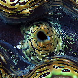 Giant Clam by Hakan Atilla - Animals Sea Creatures