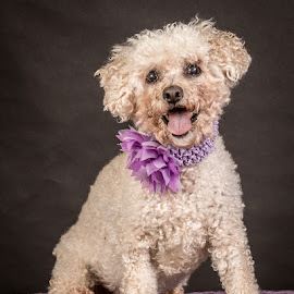 by Myra Brizendine Wilson - Animals - Dogs Portraits ( canine, foster dog mae, foster dogs, dogs, mae, pet, pets, gcspca, foster mae, dog, greater charlotte spca )