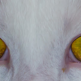 Cat Eyes by Susan Fullen - Animals - Cats Portraits (  )