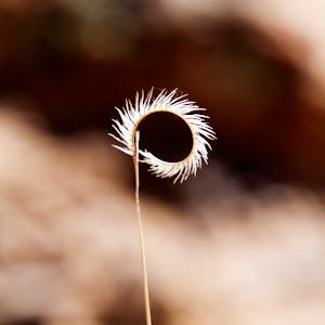 delicate grass.jpg
