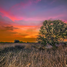by Hanan Maulana - Landscapes Prairies, Meadows & Fields