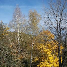 Есен by Georgi Kolev - Novices Only Landscapes ( небе., цветове., ден., есенен., дървета. )