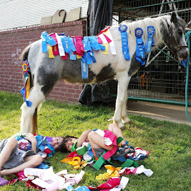 Ribbons and Fun by Greg Reeves - Animals Horses ( childern, horses, hunter jumper, awards, horse, kids )