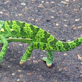 green by Nicole Janse van Vuuren - Novices Only Wildlife