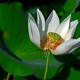 by William Wu - Flowers Single Flower