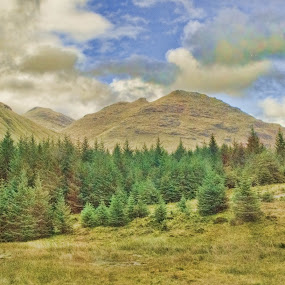 Hills & Trees by Stephanie Moore - Landscapes Mountains & Hills ( hills, scotland, nature, trees, landscape )