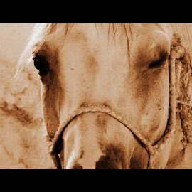 hi, hun! by Rux Georgescu - Animals Horses ( animals, wink, horse, funny, potraits )