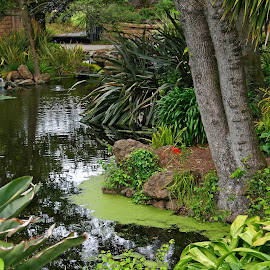 Golden Gate Green by Rhonda Tucker - City,  Street & Park  City Parks ( golden gate park, waterscape, green, san francisco may 2015, pond,  )