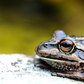 by Michelle Goh - Animals Amphibians
