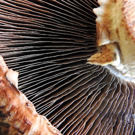 Mushroom by Ana Paula Filipe - Nature Up Close Mushrooms & Fungi ( mushroom, fungi, part, up, close )