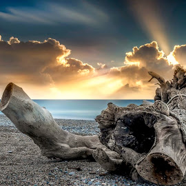 Van Isle by Jerry Kambeitz - Landscapes Beaches ( driftwood, sunset, pacific, ocean, beach )