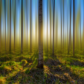 U n t i l  S p r i n g by Manu Heiskanen - Uncategorized All Uncategorized ( eskilstuna, trees, spring, paulinawolekpardon, sun )