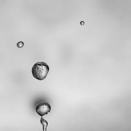 Water drops b&w by Brigitte Dechow - Uncategorized All Uncategorized (  )
