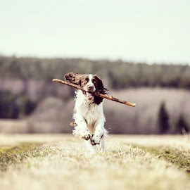 Wait for me  by Johnny Ljung - Animals - Dogs Running ( pet portrait, dogs, pet, dog portrait, dog )