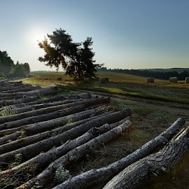 Fallen Pine Tree trunks by Fokion Zissiadis - Landscapes Prairies, Meadows & Fields