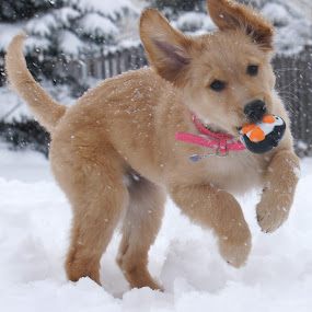 Mr Penguin loves snow too by Tracy Marie - Animals - Dogs Playing