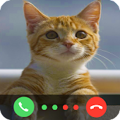 App Call From Little Cat apk for kindle fire