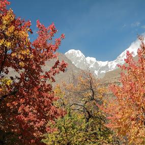 Autumn by Salman Ahmed - Nature Up Close Trees & Bushes ( pakistan, autumn, peak, sar, hunza, ultar )