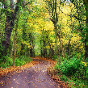 Magical forest by Michal Fokt - Nature Up Close Trees & Bushes ( autumn, forest )