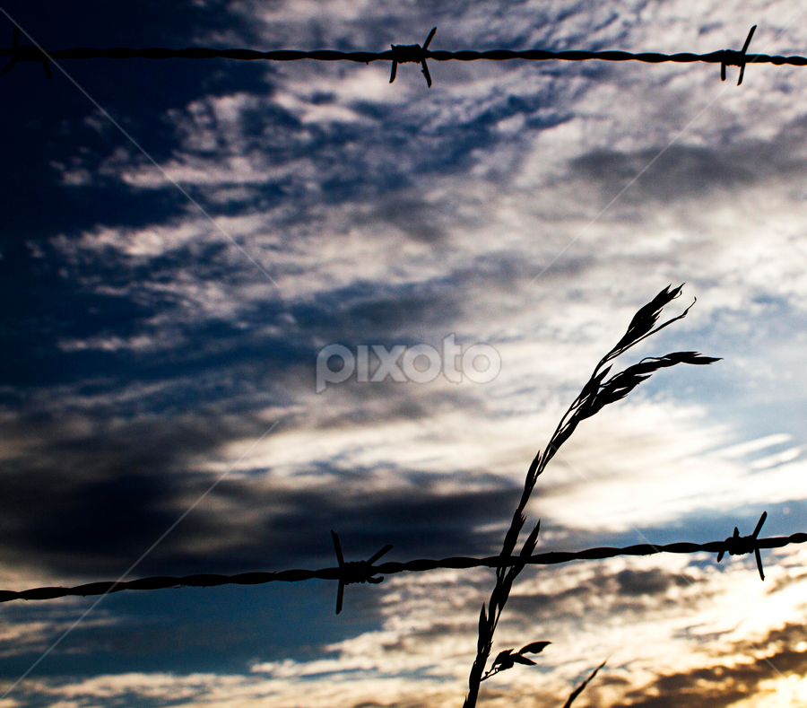 Barbed Wire Sunset by SumPics Photography - Nature Up Close Leaves & Grasses