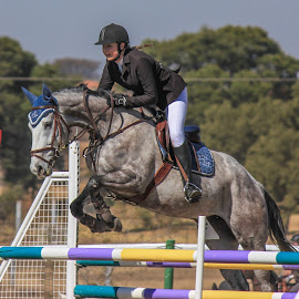 Showjumping by Dirk Luus - Sports & Fitness Other Sports ( rider, equine, horse, sport, showjumping, competition )