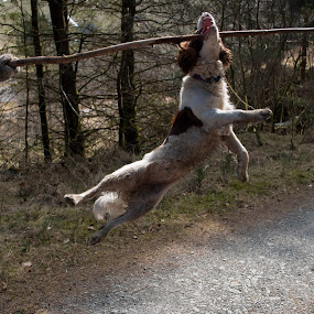 by Hannah Rugg - Animals - Dogs Playing