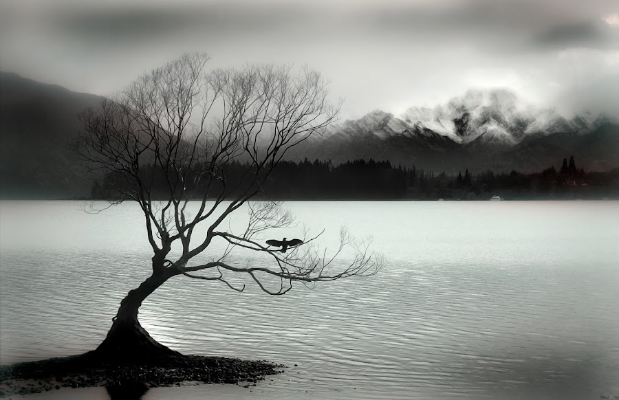 Wanaka by Craig  Mitchell - Landscapes Waterscapes ( water, bird, monochrome, mountain, winter, tree, cold, lake, new zealand )