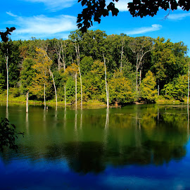 by Kimberly Sharp - Landscapes Waterscapes ( novice, nature, beautiful, fall, maryland, blue water, lake )