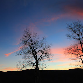moonlight sunset by Nick Sweeney - Novices Only Landscapes ( moon, rising, neon, stars, sunset, trees, sun )