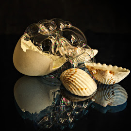 Still Life by Prasanta Das - Artistic Objects Still Life ( sea shrlls, still life, bubbles )