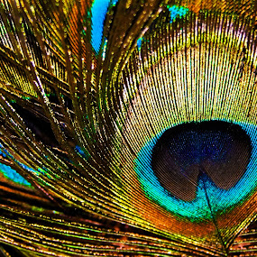 Eye Of The Peacock by Mike Mills - Abstract Macro ( colour, bird, macro, pattern, feather, peacock, eye )