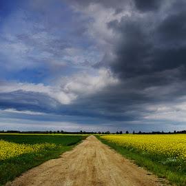 20170509-DSC_0575 by Zsolt Zsigmond - Landscapes Prairies, Meadows & Fields ( field, nature, agriculture, summer, rural scene )