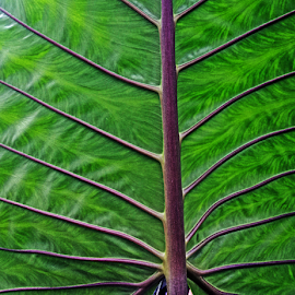 Leave by Steven De Siow - Nature Up Close Leaves & Grasses ( nature, green leaf, abstract, leaf, nature close up,  )