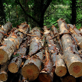 Logs at Mallards Pike by DJ Cockburn - Artistic Objects Other Objects ( gloucestershire, forest, log, woodland, countryside, rural, forest of dean, wood, mallards pike lake, timber, logpile, forestry )