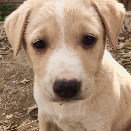 Man's best friend by Sanjeev Dhiman - Animals - Dogs Puppies ( #dog #cute #innocent, puppy )