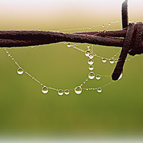 by Crystal  Wilson - Nature Up Close Natural Waterdrops (  )