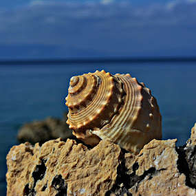 obala by Jelena Puškarić - Artistic Objects Other Objects (  )