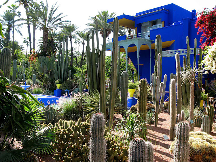 Yves saint laurent 39 s jardin majorelle in marrakesh for Jardin yves saint laurent marrakech