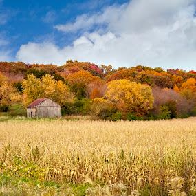 Autumn in the Countryside  by Amanda  Castleman  - Landscapes Prairies, Meadows & Fields ( field, autumn, fall, farmland, leaves, autumnal colors, rural,  )