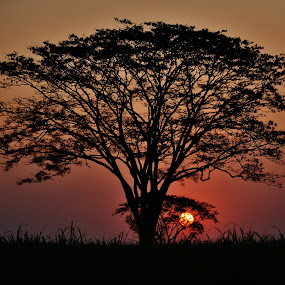 Another beautiful tree at sunset in Itapura SP Brazil by Marcello Toldi - Landscapes Sunsets & Sunrises