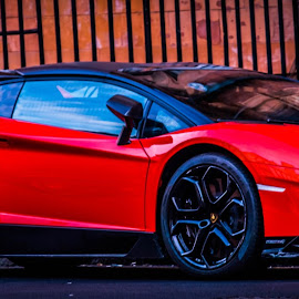 Lamborgini by Raimondas Zavackis - Transportation Automobiles ( car, italian, red, auto, lamborgini )