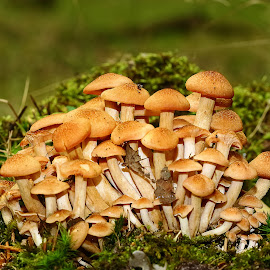 Grappolo di funghi by Gérard CHATENET - Nature Up Close Mushrooms & Fungi