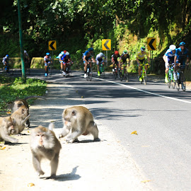 tour de lombok mandalika  by Agoes Santoso - Sports & Fitness Cycling