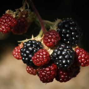blackberry 1 by Tomislav Šestak - Nature Up Close Gardens & Produce ( pwcvegetablegarden )