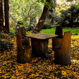 Rustic picnic table by Ioana Rusu - Artistic Objects Furniture ( park, trees, leaf, leaves, rustic, picnic table, woods, picnic )